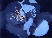 Cabbage in Bloom -- artwork © Shelley Martin (click to see a larger version of the painting)